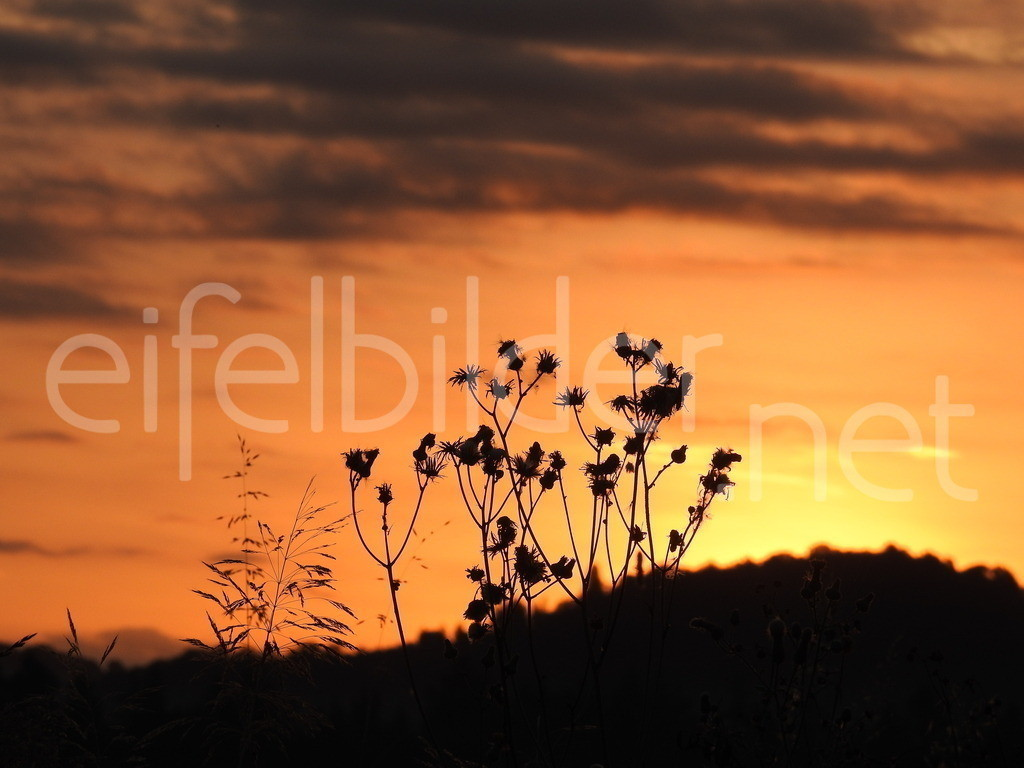 Sonnenaufgang in der Vulkaneifel | Sonnenaufgang in der Eifel - Farbspiele der goldenen Stunde