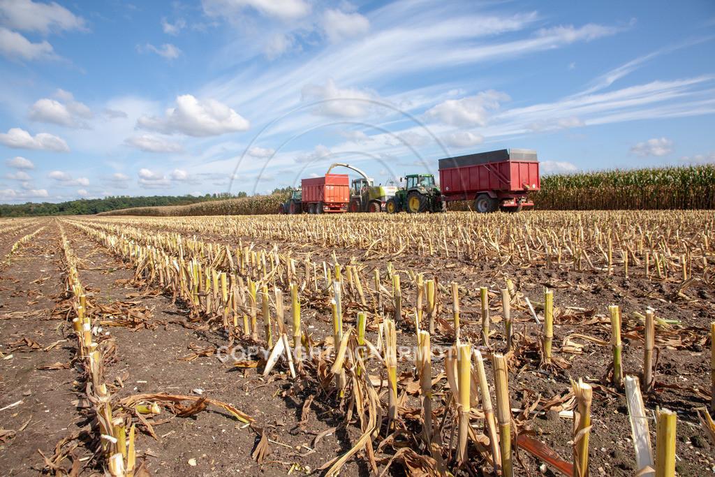 20080914-IMG_8981   Silomais wird gehäckselt - AGRARFOTO Bilder aus der Landwirtschaft