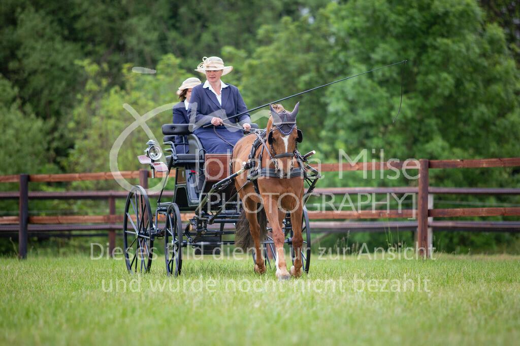 190525_Fahren-008 | Pferdesporttage Herford 2019 Fahren