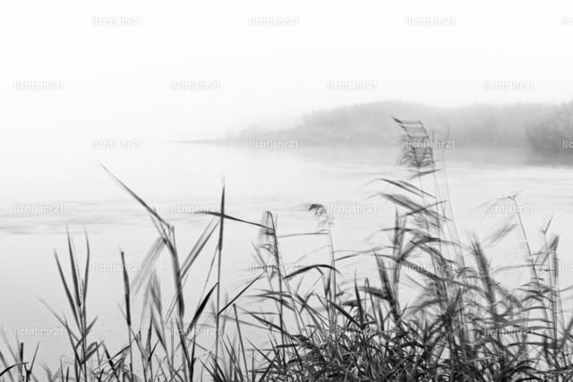 Nebelstimmung im Oderbruch | Von leichtem Wind elegant bewegte Halme und Gräser am Ufer der Oder im Vordergrund, dichter Morgennebel macht den Hintergrund nur schemenhaft erkennbar, erkennbare Bewegung durch dezente Langzeitbelichtung, Schwarzweißbild - Location: Deutschland, Oderbruch