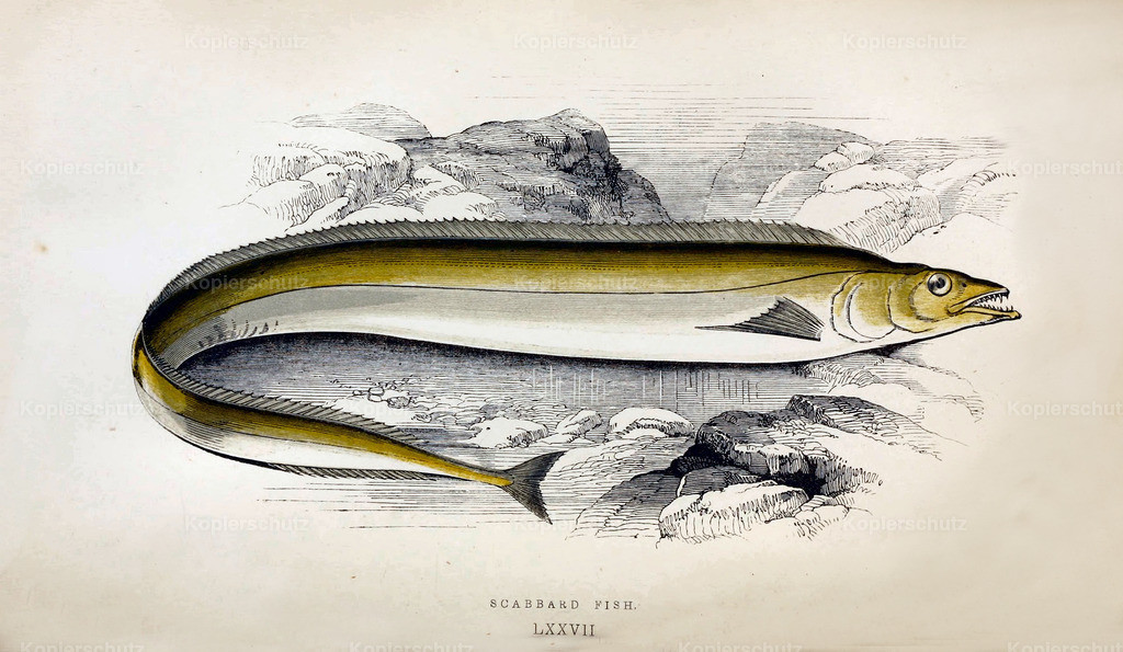 A-History-of-the -Fishes- of- the- British-Islands-Fische-1862-1866 (29)