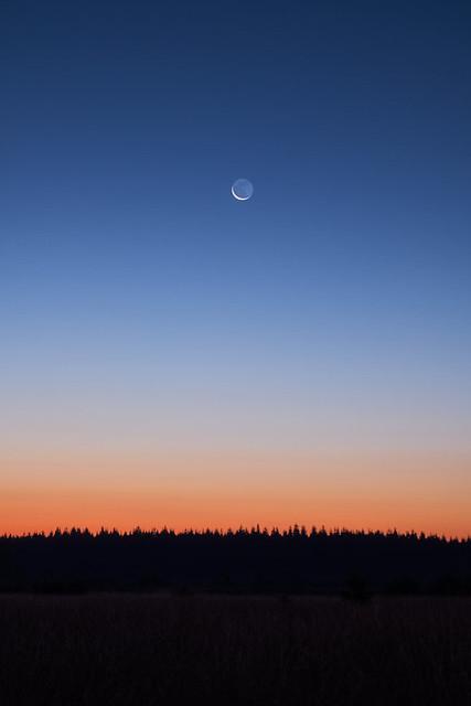Einsamer Mond | Die feine Sichel des Mondes steht über der Waldsilhouette im Venner Hochmoor. Ein perfekter Gradient zieht von orange nach dunkelblau über das Firmament.