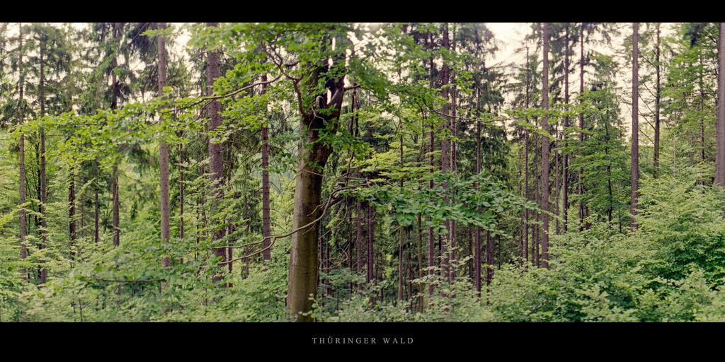 Thüringer Wald   Fichtenwald mit Buche im Thüringer Wald