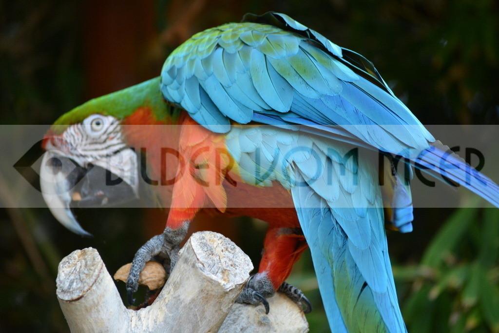Fotoausstellung Meer Bilder | Papagei Bilder
