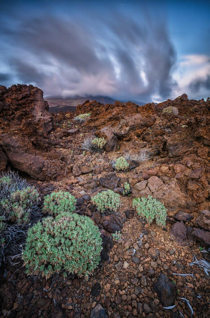 Leben auf Lavafeldern