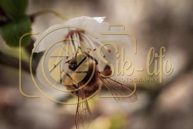 Fleißiges Bienchen 10