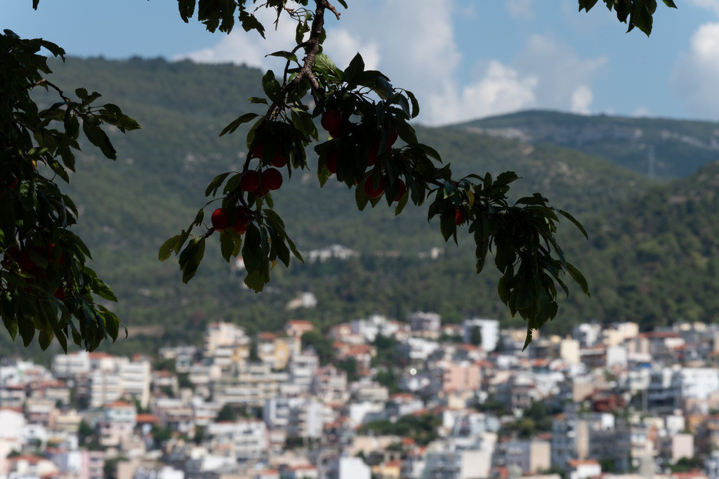 20190712-Leaves in front of Kavala