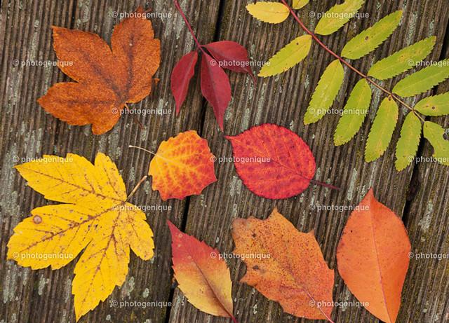 Herbstlaub-web