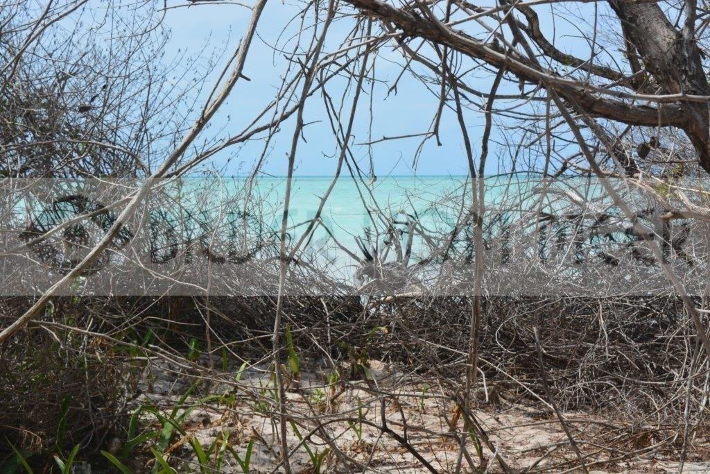 Bilder vom Meer   Blick aus dem Dickicht der Insel Cayo Jutías Kuba