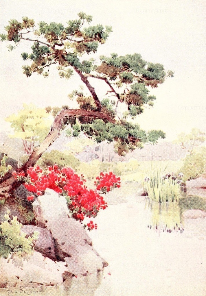 Du Cane_ Ella (1874-1943) - Flowers _ Gardens of Japan 1908 - Azalea _ Pine-tree