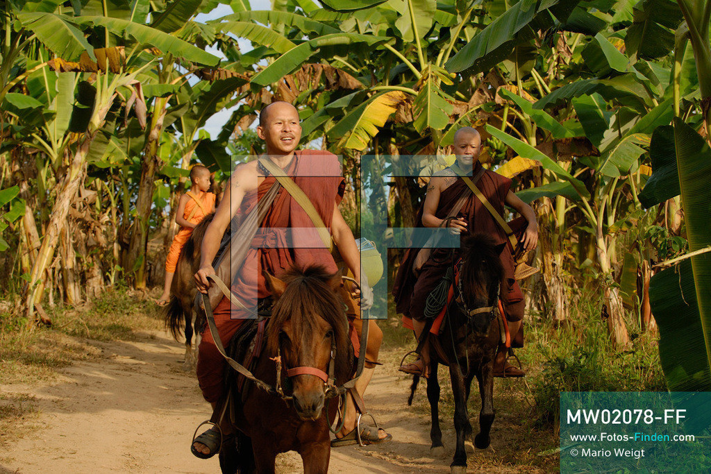 MW02078-FF | Thailand | Goldenes Dreieck | Reportage: Buddhas Ranch im Dschungel | Mönche auf Almosengang  ** Feindaten bitte anfragen bei Mario Weigt Photography, info@asia-stories.com **