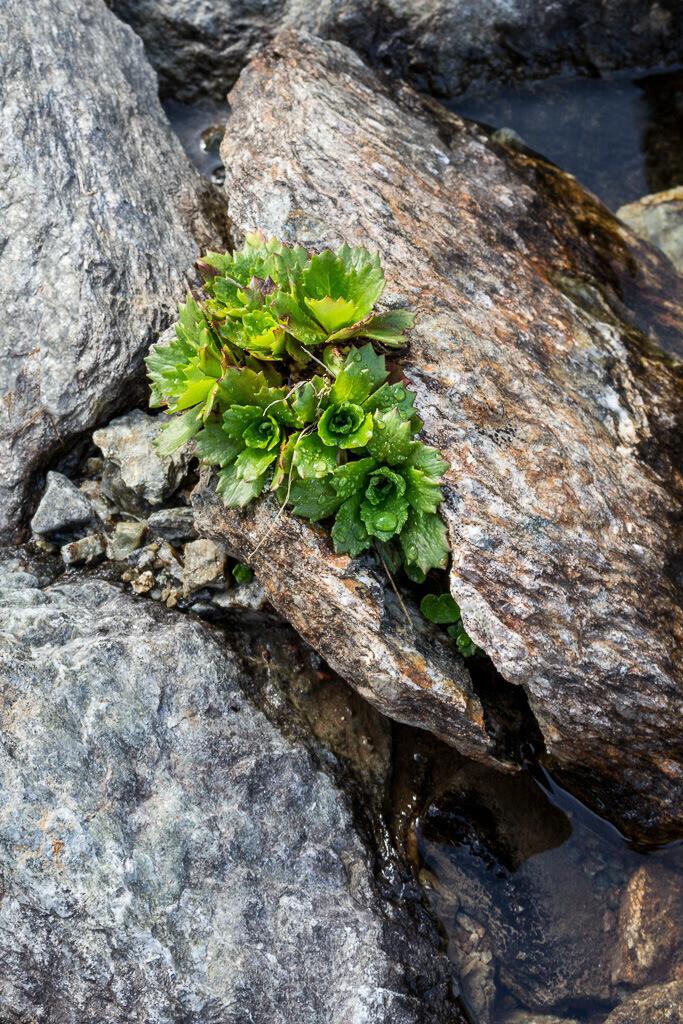 Pflanze sucht sich ihren Weg durch die Steine