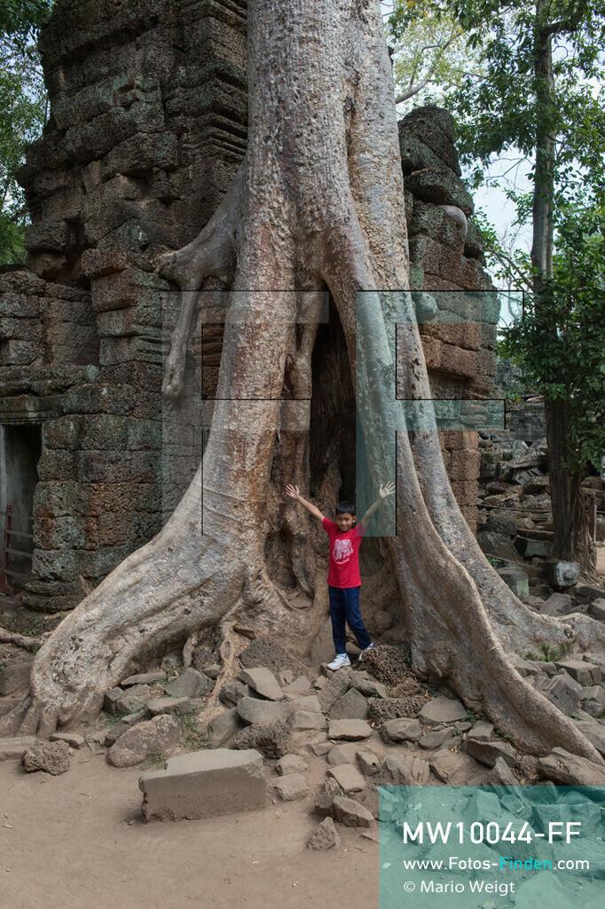MW10044-FF | Kambodscha | Siem Reap | Reportage: Sombath erkundet Angkor | Sombath zwischen den großen Brettwurzeln eines Kapokbaumes im Dschungeltempel Ta Prohm.  Der achtjährige Sombath lebt in Kambodscha im Dorf Anjan, sechs Kilometer westlich von Siem Reap entfernt. In seiner Freizeit nimmt ihn manchmal sein Onkel in die berühmte Tempelanlage von Angkor mit. Besonders mag er die riesigen Wurzeln der Kapokbäume, die auf den uralten Mauern wachsen. Seine Lieblingstempel in Angkor sind Ta Prohm, Banteay Kdei und Preah Khan.  ** Feindaten bitte anfragen bei Mario Weigt Photography, info@asia-stories.com **
