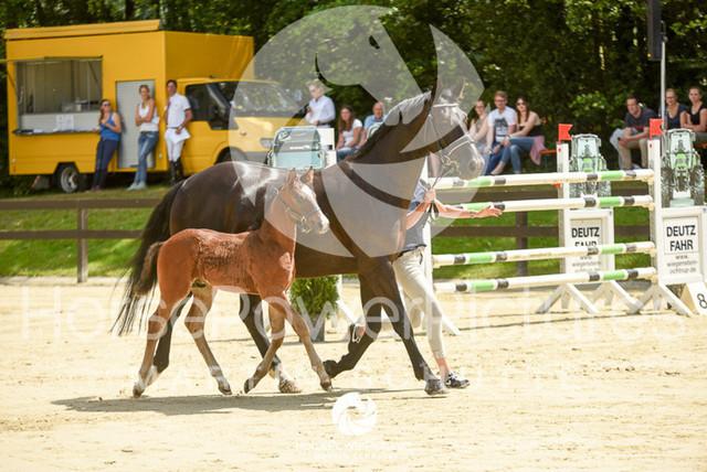 RFV Ochtrup - Fohlenparade-0797