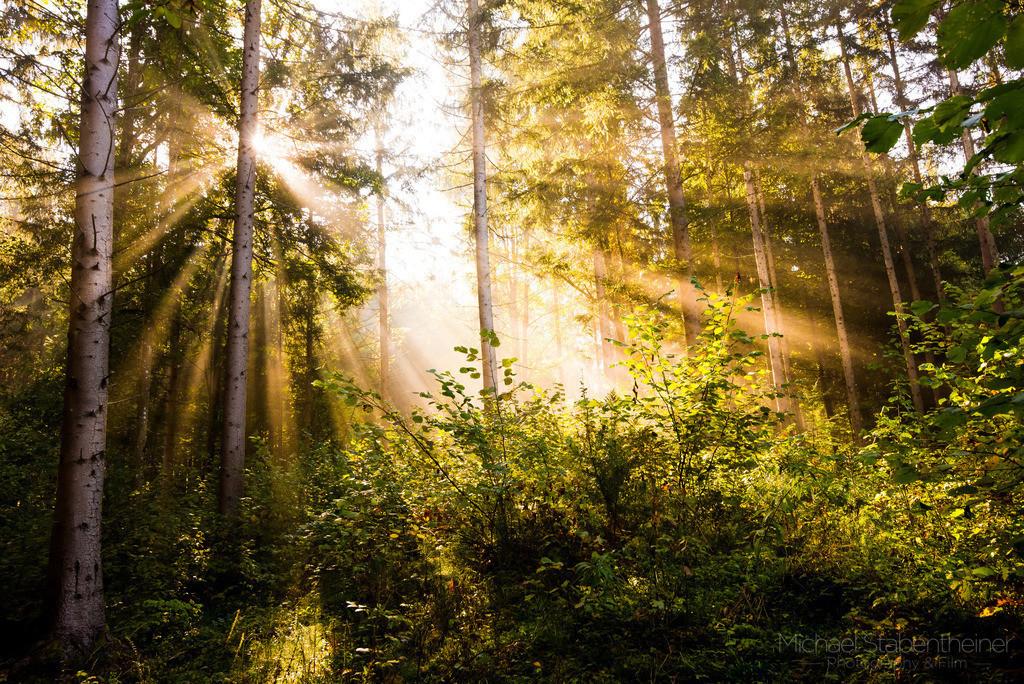 Herbst im Wald | Sonnenstrahlen im Wald mit Nebel