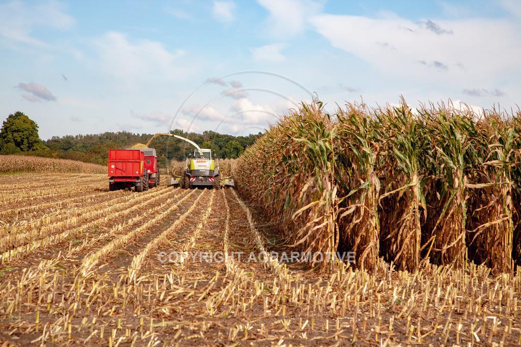 20080914-IMG_8934   Silomais wird gehäckselt - AGRARFOTO Bilder aus der Landwirtschaft