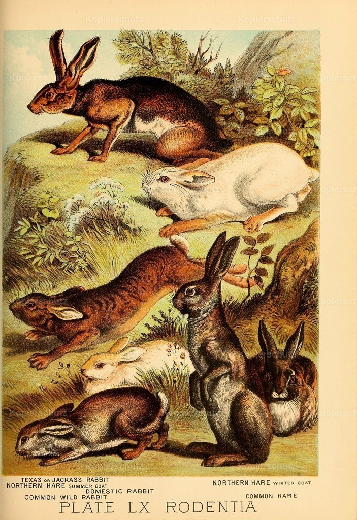 Johnson_s- Household-Book- of-Nature-1880-(61)
