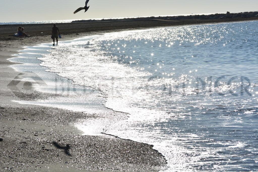 Strand Bilder | Möve:Morgenflug am Strand