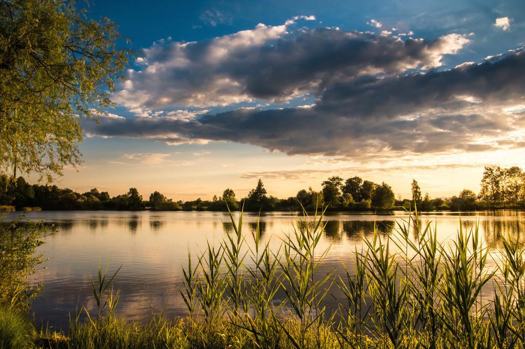 Sommerabend am See | Sonnenuntergang an einem See in der Oberrheinebene