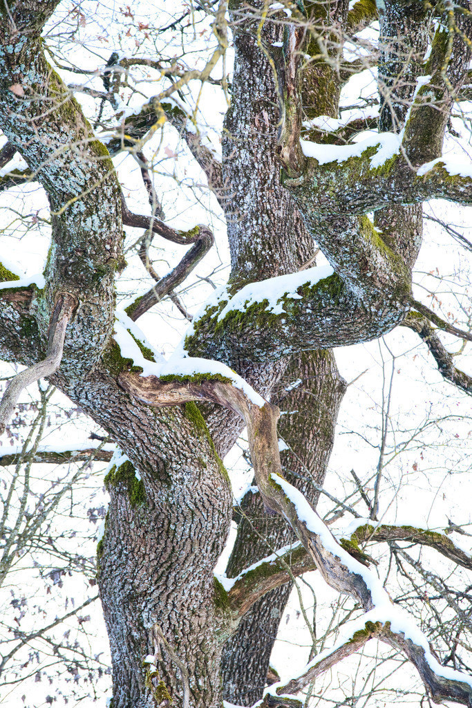 Winter Shows Details