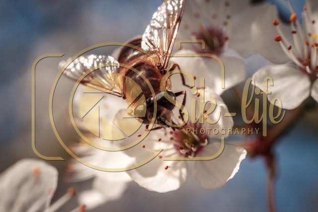 Fleißiges Bienchen 6