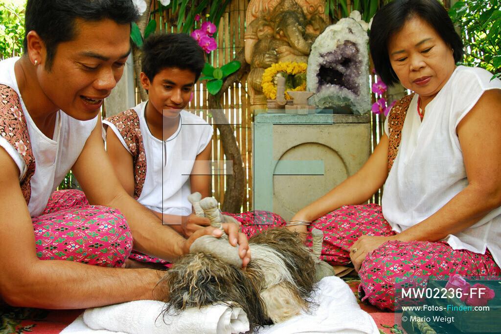 MW02236-FF | Thailand | Bangkok | Reportage: Wellness für Hunde | Das Indo Thai Dog Spa wird von Herrn Jare Jansrisuriyawong geführt. Er bietet verschiedene Blütenbäder, Steinmassagen und Kräuterbehandlungen für Herrchens und Frauchens Liebling an. Shih Tzu Dollar erhält eine Kräuterstempelmassage.   ** Feindaten bitte anfragen bei Mario Weigt Photography, info@asia-stories.com **
