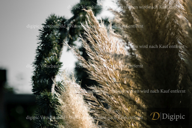 Gras1-Vorschaubild | Gras am Wasser