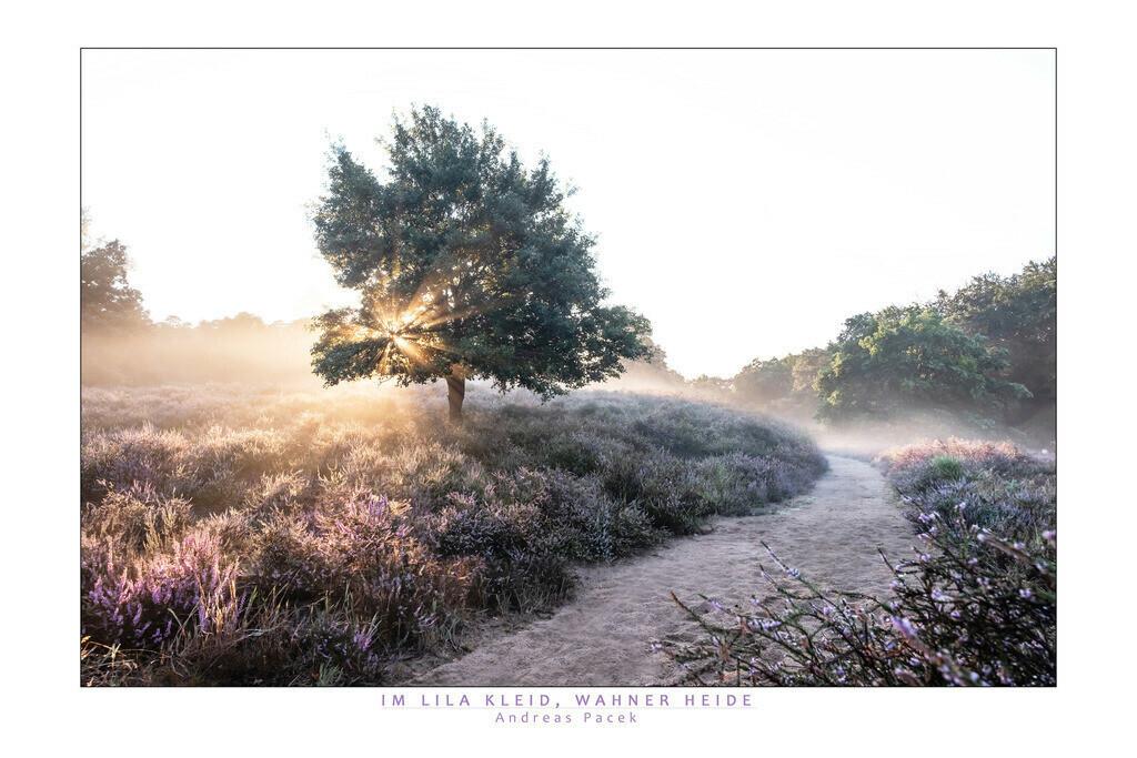 Im lila Kleid, Wahner Heide | Die Serie 'Deutschlands Landschaften' zeigt die schönsten und wildesten deutschen Landschaften.