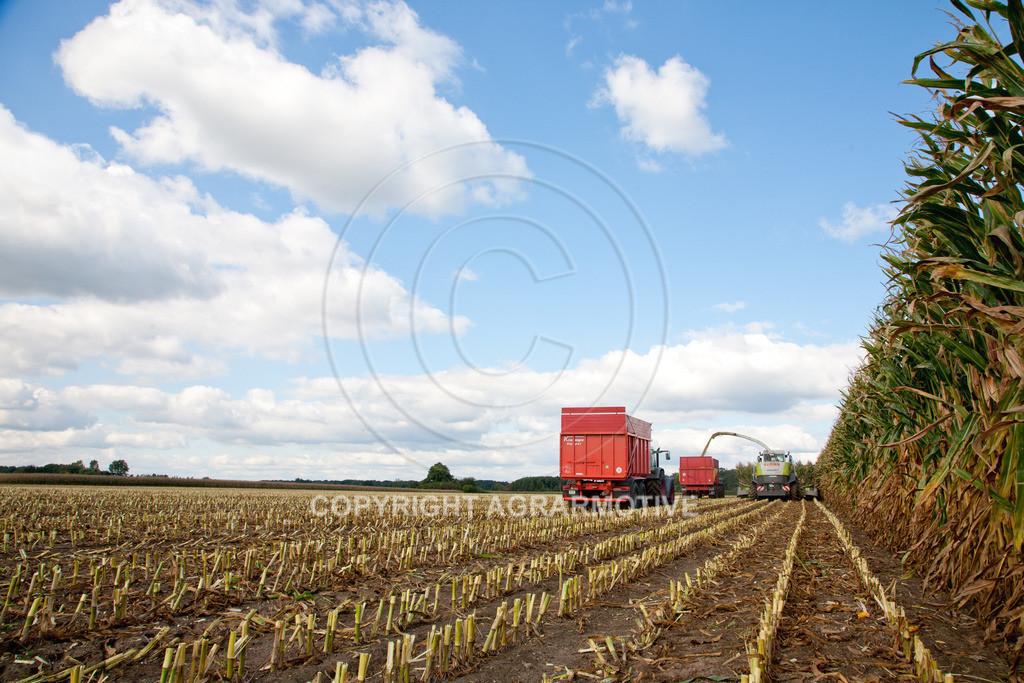 20080914-IMG_9087 | Silomais wird gehäckselt - AGRARFOTO Bilder aus der Landwirtschaft