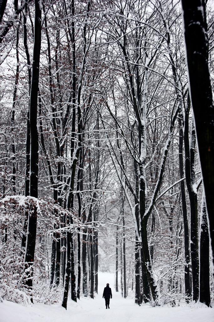 Winter | Wald tief verschneit im Winter. Frau geht einen Waldweg entlang.