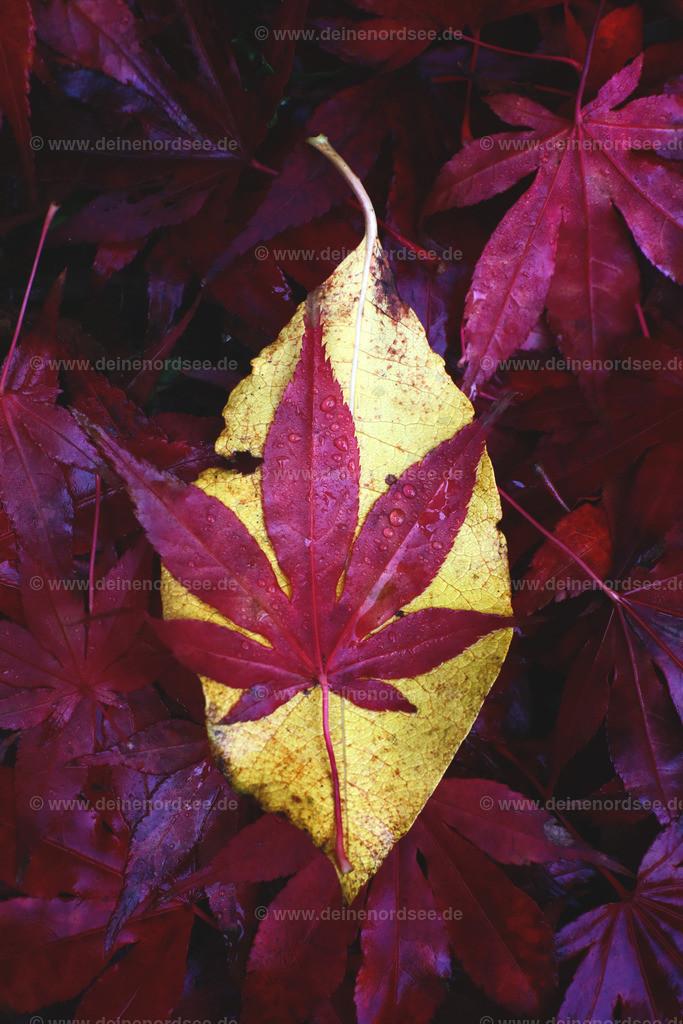 ...hier bleibe ich liegen - Herbst