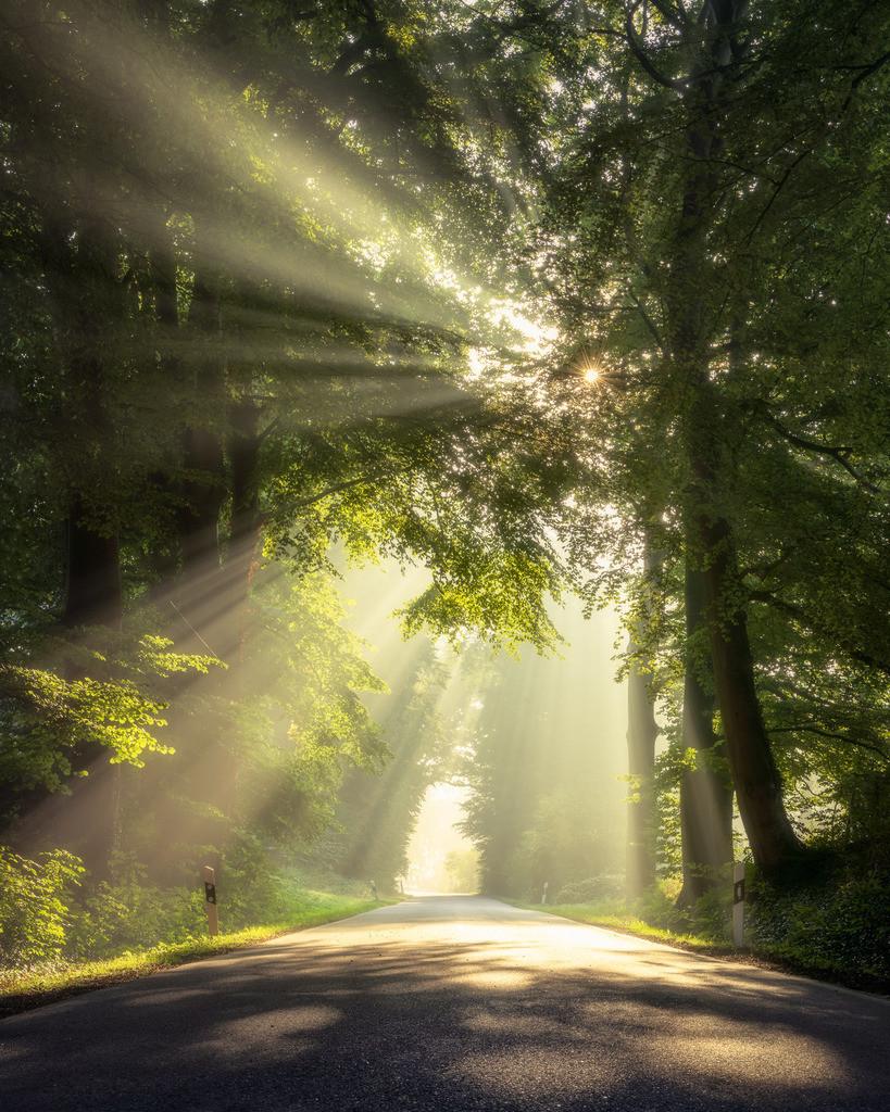 The Rays | Die Morgensonne bricht durch den Nebel +++ Image by Matt Rimkus Photography (https://rimkus.photo)