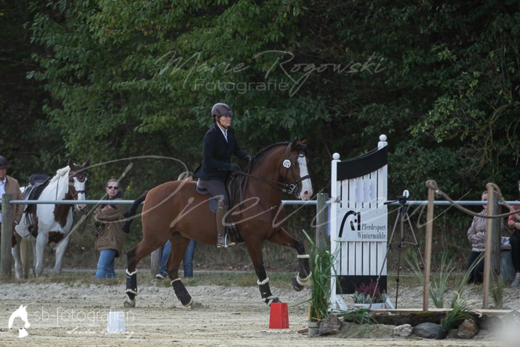 pferdefotografie sb-fotografien   www.sb-fotografien.de