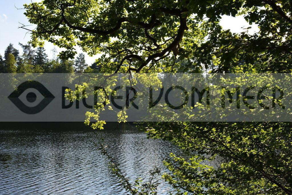 Foto Landschaft | Foto Landschaft, Waldweiher von Gattikon