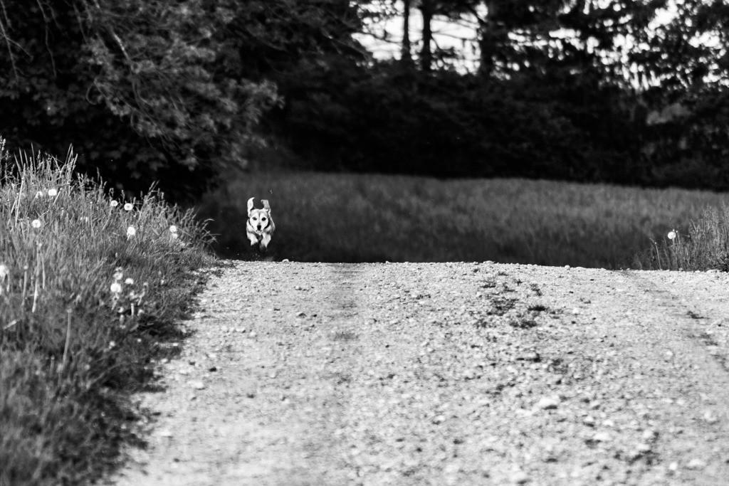 dogs--elmar.pics_00675