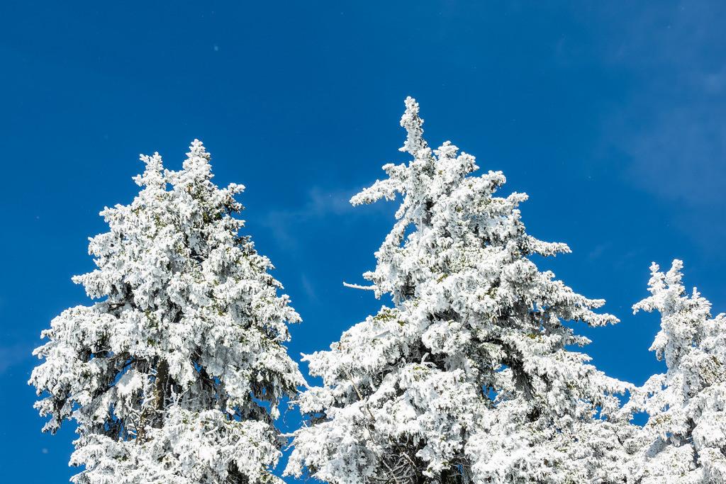 rk_05765 | Winter im Riesengebirge bei Janske Lazne, Tschechien.