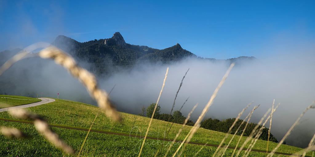Heuberg im Herbst | Nebel und reife Gräser mit Heuberg im Hintergrund