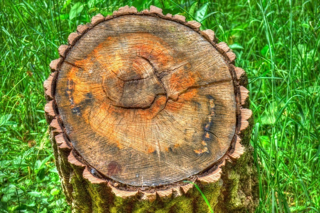 stump - Baumstumpf