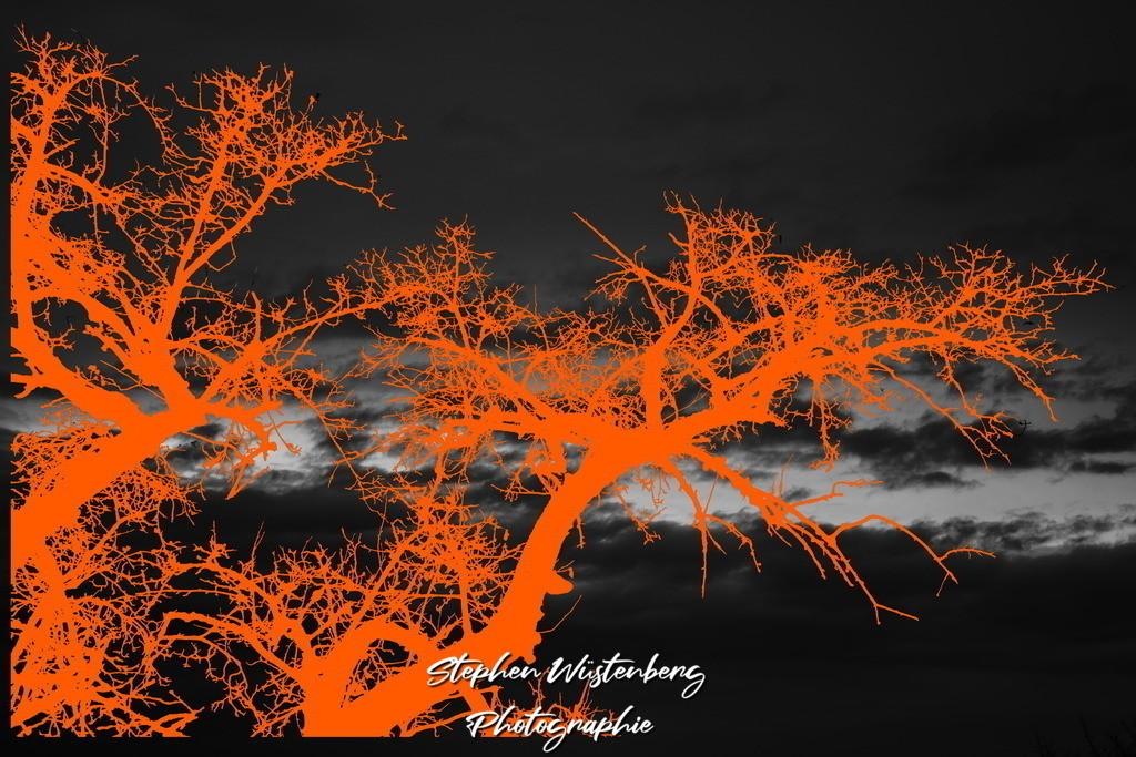 Dark Orange | Dark Orange - Orangenes Geäst auf SW-Wolkenfront