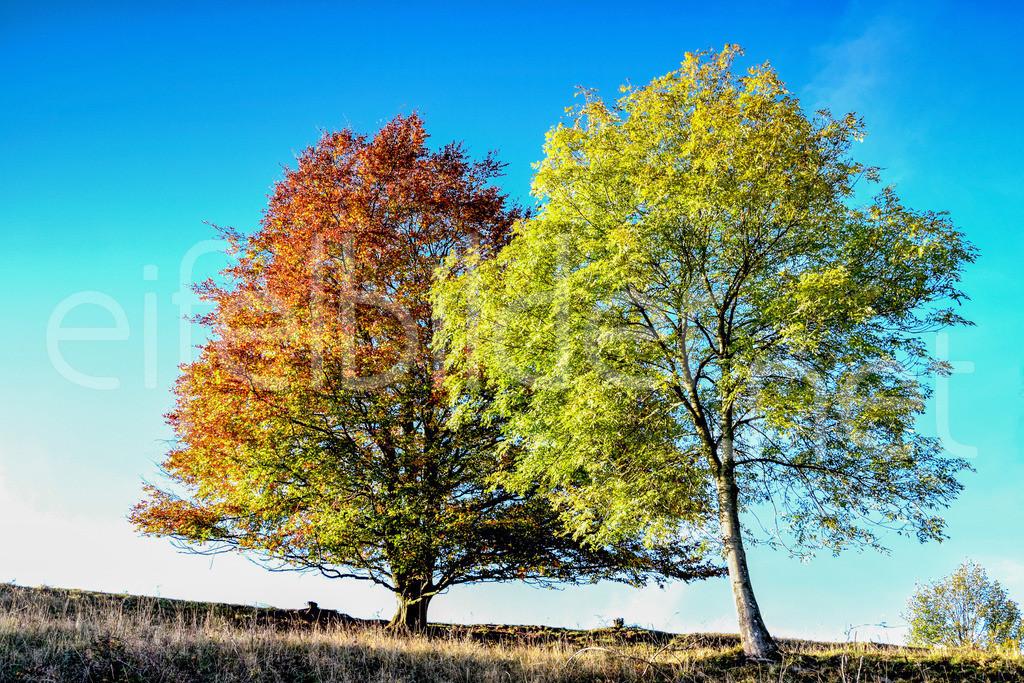 bunter Herbst | fotografiert in Daun, Vulkaneifel