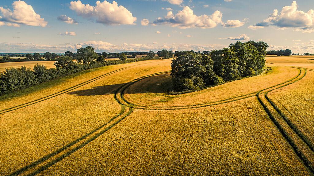 Feldkreise | Getreidefeld mit Fahrspuren zwischen Pöhls und Heilshoop.