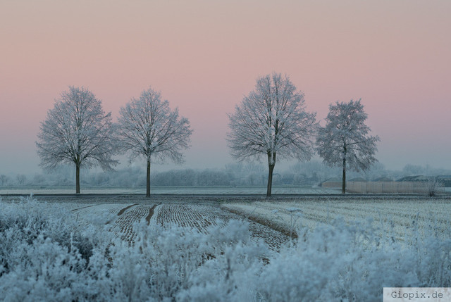 Winterlandschaft Raderbroich | Winterliche Landschaft in Raderbroich mit Bäumen zum Sonnenaufgang