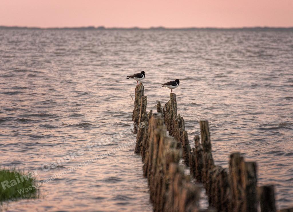 170721-10-Harlesiel am Meer