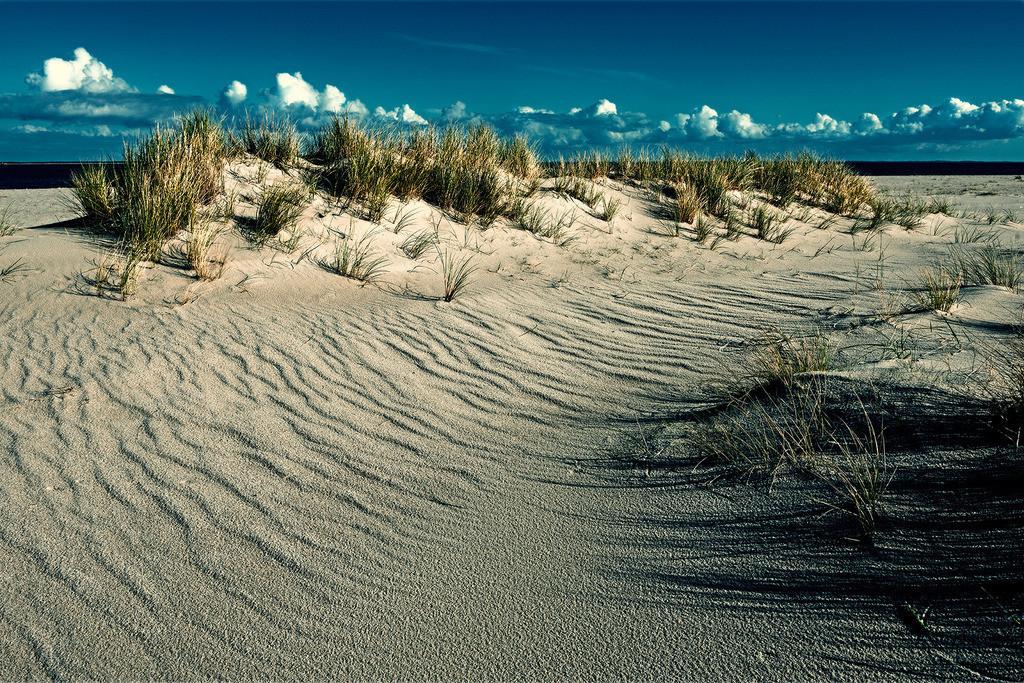 Dünenleben | Dünenlandschaft am Ellenbogen auf Sylt, Deutschland, weiße Wolkenkette am blauen Himmel.