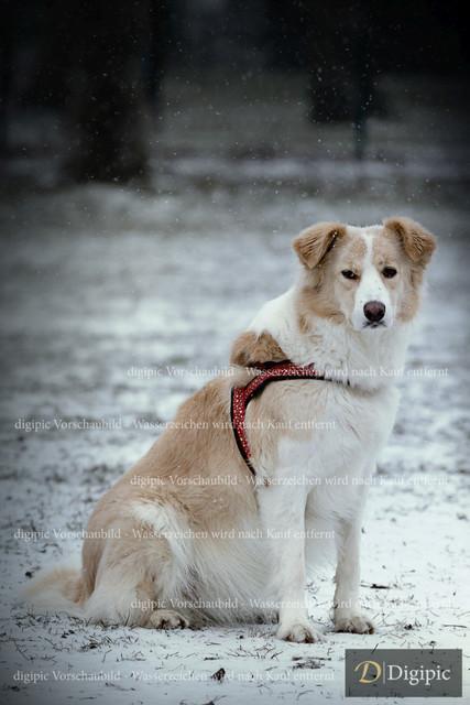 Hund 2 - Vorschaubild | Rüde auf Hundewiese