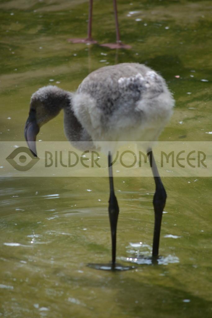 Flamingo Bilder   Rosa Flamingo Bilder