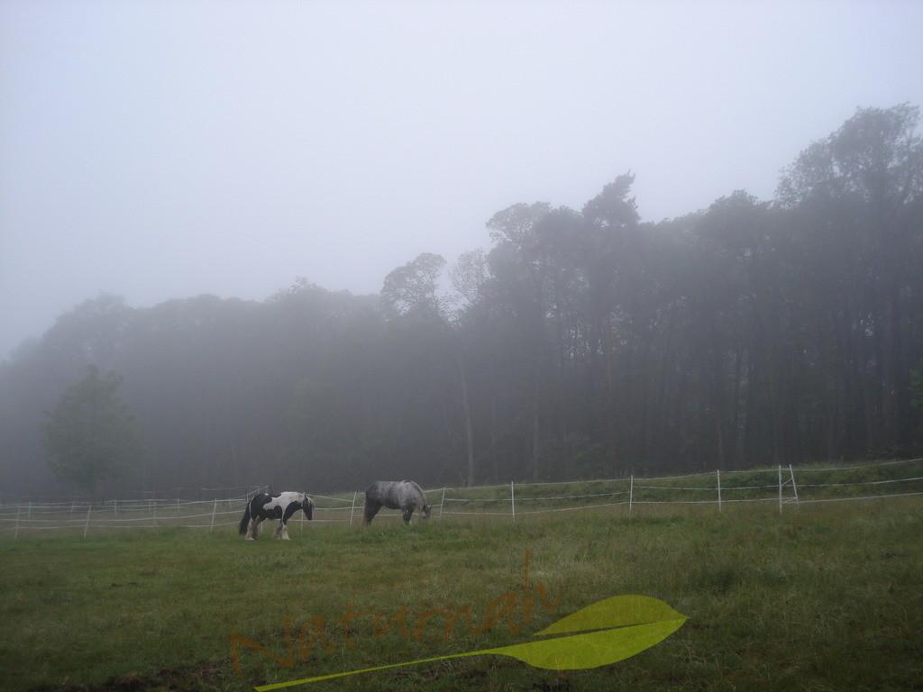Nebelweide
