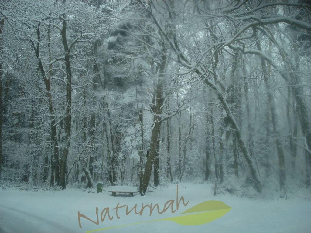 Winterzauberwald 1