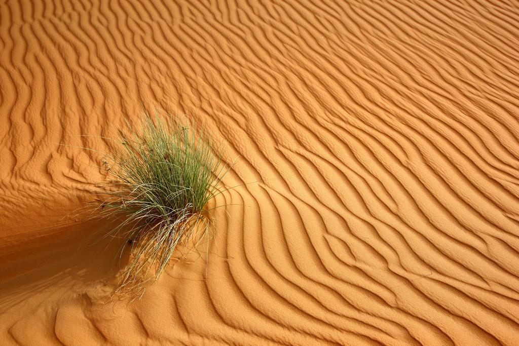 JT-110228-3981 | Roter Sand, Sandduenen, in der Empty Quarter genannten Wueste Rub'al-Khali, vereinzelte Pflanzen ueberleben. Abu Dhabi, Vereinigte Arabische Emirate.