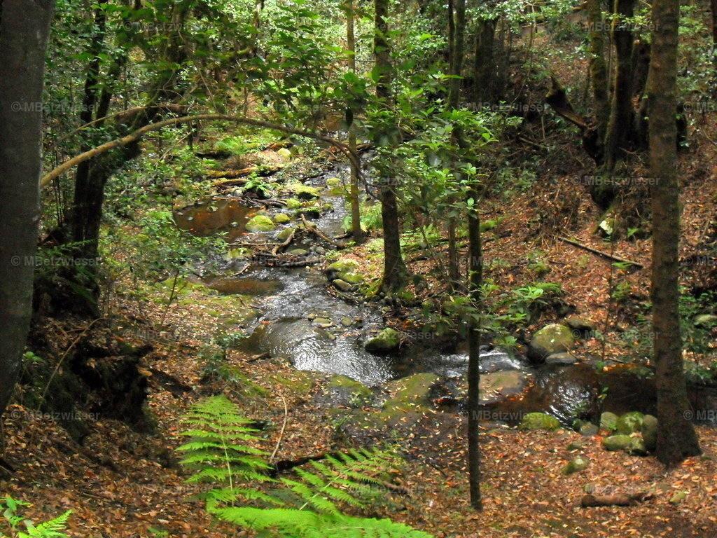 DSCF0128 | Im Bosque del Cedro